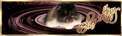 Питомник персов и экзотов Edner-cattery